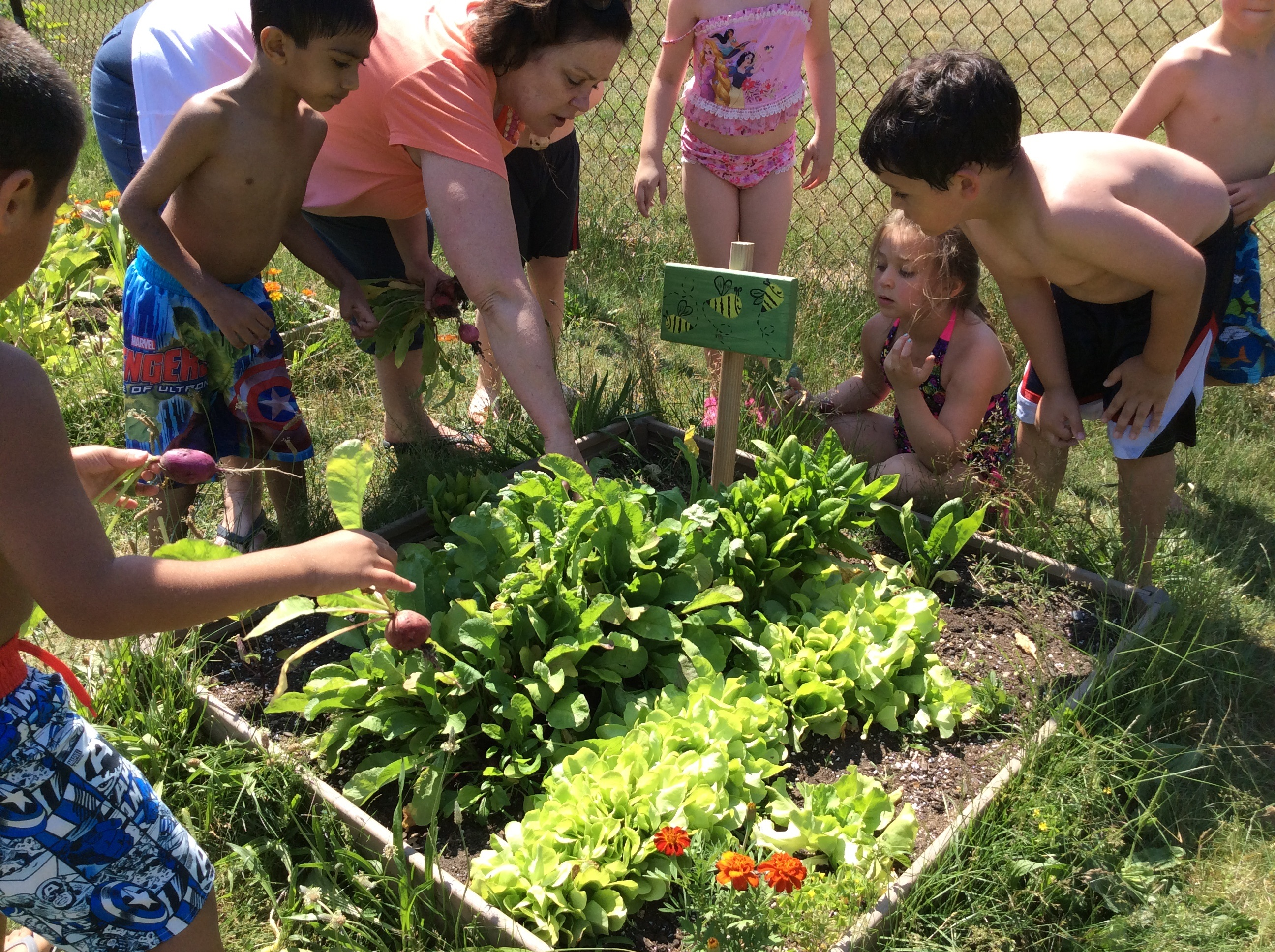 Pre K Kindergarten Center Help Harvest Vegetables They Planted In Box Gardens To Research The Question Can We As A Cl Cultivate Garden And Grow